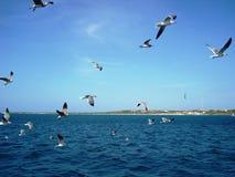 飞行在海运的海鸥 免版税库存照片