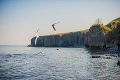 飞行在海运的海鸥 库存图片