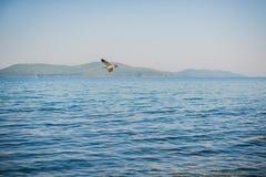 飞行在海运的海鸥 库存照片