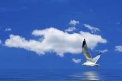 飞行在海鸥水的云彩 免版税库存图片