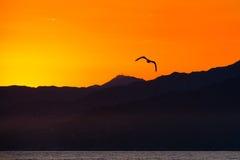 飞行在海洋的鸟 库存照片