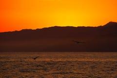 飞行在海洋的鸟 图库摄影