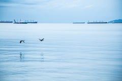 飞行在海洋表面的鹅夫妇 免版税库存图片
