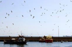 飞行在港口的海鸥 免版税库存照片
