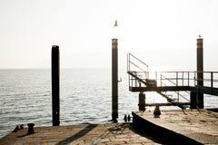 飞行在码头的海鸥 免版税库存图片