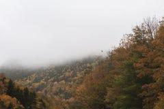飞行在秋天场面的鸟 免版税库存照片