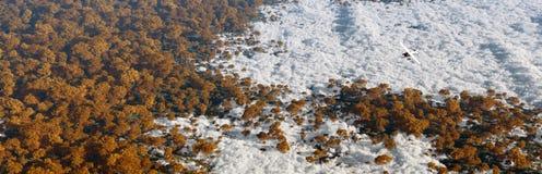 飞行在秋天森林的飞机天线盖由云彩 库存图片
