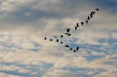 飞行在美丽的天空的现出轮廓的鹅 库存图片