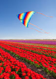 飞行在美丽的红色郁金香的风筝在天期间 免版税库存图片