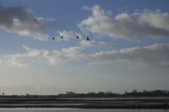 飞行在美好的风景的鸟 库存照片