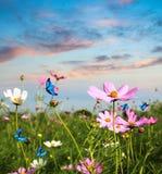 飞行在花的蝴蝶 免版税库存照片