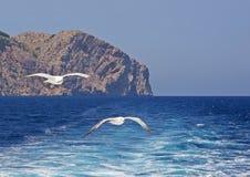 飞行在苏醒的两只海鸥 免版税图库摄影
