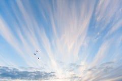 飞行在蓝天的三只鸟 免版税库存图片