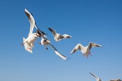 飞行在蓝天的海鸥 免版税库存照片