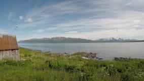 飞行在蓝色海湾的天空中的美好的北极燕鸥和海鸥群 股票视频