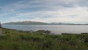 飞行在蓝色海湾的天空中的美好的北极燕鸥和海鸥群 股票录像