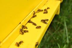 飞行在蜂房的蜂 图库摄影