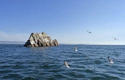 飞行在贝加尔湖的观点的岩石和海鸥 免版税库存图片