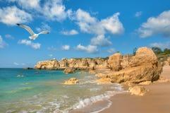 飞行在金黄海滩的海鸥在阿尔布费拉,葡萄牙附近 库存照片
