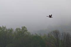 飞行在雾的加拿大鹅 免版税库存照片