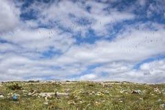 飞行在露天转储的海鸥 免版税库存图片