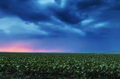 飞行在领域的暴风云 免版税库存照片
