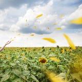 飞行在风的黄色瓣 免版税库存图片