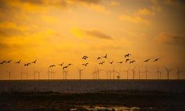 飞行在风车的鸟 库存图片