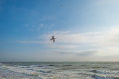 飞行在风雨如磐的海的鸟 免版税图库摄影
