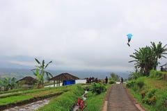 飞行在巴厘岛的一只风筝 免版税图库摄影