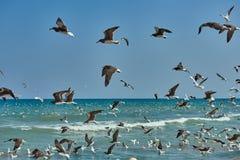飞行在水和漂浮在海的海鸥 库存照片