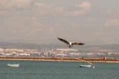 飞行在3月Menor期间的海鸥穆尔西亚 免版税库存图片