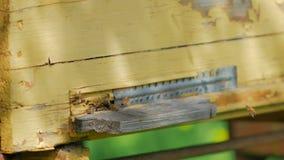 飞行在他们的蜂箱附近的蜂 影视素材