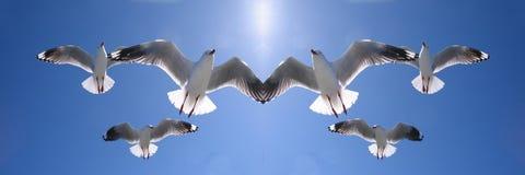 飞行在头顶上在蓝天的六只天堂般的由后照的海鸥 免版税图库摄影