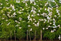 飞行在Bangpu海的小组海鸥 免版税库存照片