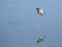 飞行在Plaiaundi的趟水者 库存图片