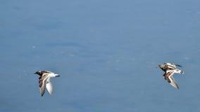 飞行在Plaiaundi的趟水者 免版税库存照片