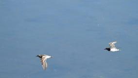 飞行在Plaiaundi的趟水者 免版税库存图片