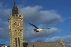 飞行在Porthlevan捕鱼港口的海鸟 库存照片