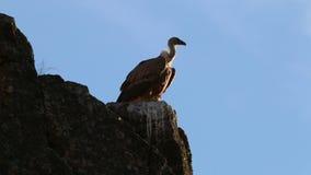 飞行在Salto del Gitano,西班牙附近的兀鹫 股票视频