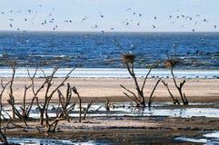 飞行在Salton Sea湖的鸟群  免版税库存照片