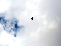 飞行多云天空的唯一鸟 免版税图库摄影