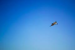 飞行天空的鸟 库存照片