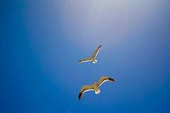 飞行天空的鸟 图库摄影