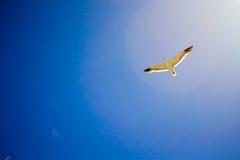 飞行天空的鸟 免版税图库摄影