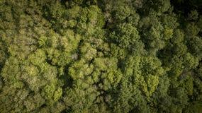 飞行天线在一个美丽的绿色森林的一个农村风景的,吉伦特省 免版税图库摄影