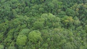 飞行天线在一座美丽的绿色森林山的在一个农村风景 股票视频