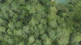 飞行天线在一座美丽的绿色森林山的在一个农村风景 影视素材