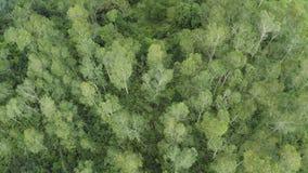 飞行天线在一座美丽的绿色森林山的在一个农村风景 股票录像
