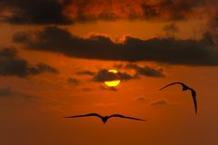 飞行希望的剪影自由鸟 库存照片